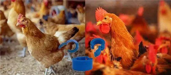 村田RFID标签在活禽管理的应用